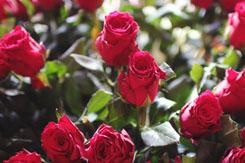 Sweet Pea Florists - Wedding Flowers